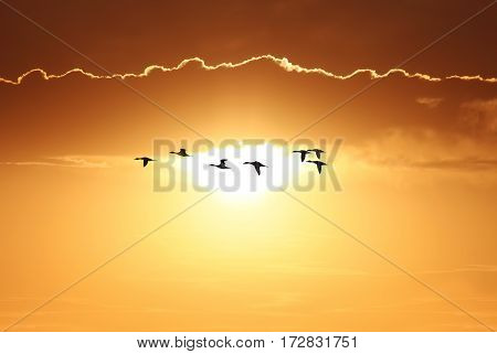 Birds over bright sunny yellow sky background with copy space