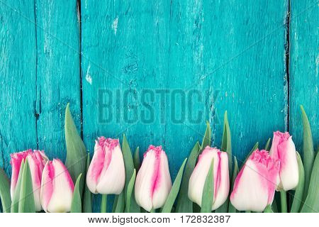 Frame Of Tulips On Turquoise Rustic Wooden Background. Spring Flowers. Spring Background. Greeting C