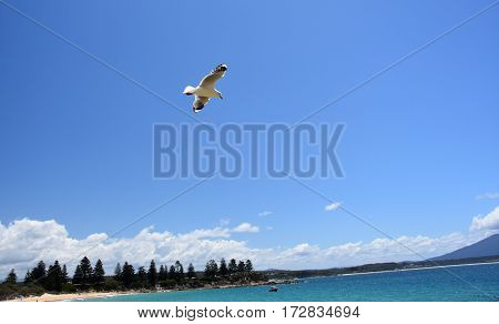 Seagull flying on beach. Fly seagull. Seagull and sea. Seagull flying over the sea. White seagull soaring in the blue sky.