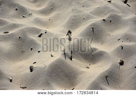 Sand with wooden debris background. Beautiful sand background. Sand Texture background. Closeup of sand.