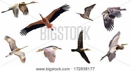 Group of birds over white background nature concept