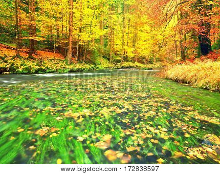 Fall River. Autumn Season At Mountain River. Green Algae