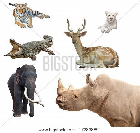Group of Isolated tiger crocodile elephant deer white tiger rhinoceros