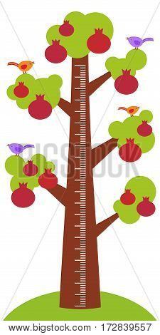 Big pomegranate tree with green leaves birds and ripe dark red garnet fruit on white background Children height meter wall sticker kids measure. Vector illustration