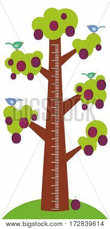 Big tree with green leaves birds and ripe purple plums on white background Children height meter wall sticker kids measure. Vector illustration