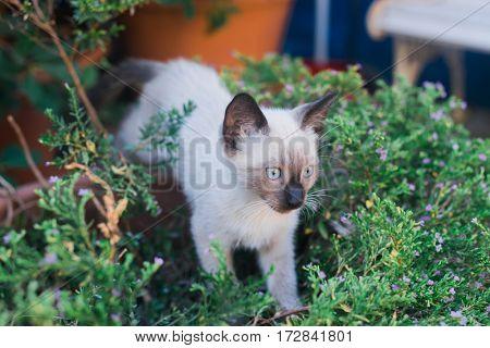 Young cat exploring