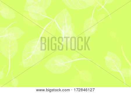 Green leaf pattern on green bokeh blur background - ecology or environment background