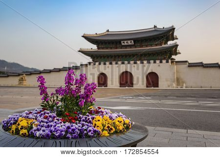 Spring in Seoul city at Gwanghwamun Gate, Seoul, South Korea