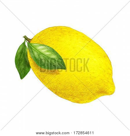 Hand drawn illustration of lemon. Digitally colored.
