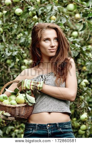 Beautiful young woman picking ripe organic apples in wooden crate in orchard or on farm on a fall day