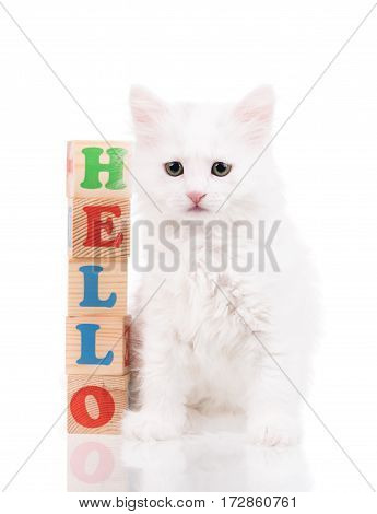Cute fluffy white kitten with playing cubes isolated over white background