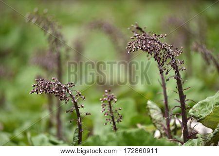 Dry Purple Flowers In The Meadow