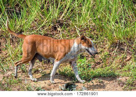 Stray dog is running on foliage background