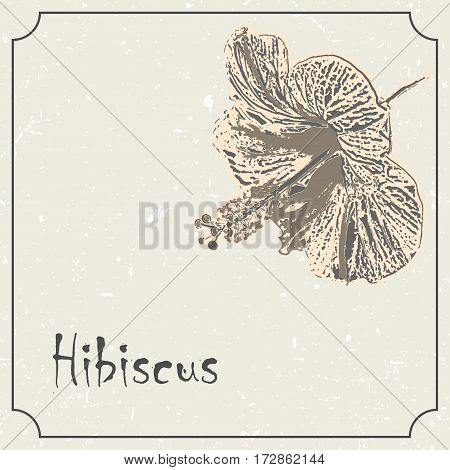 Hawaii monochrome hibiscus flower. Vintage grunge marriage design template, floral artwork. Vector illustration of summer concept for invitation, card, flyer, ticket, boutique logo, label, banner.