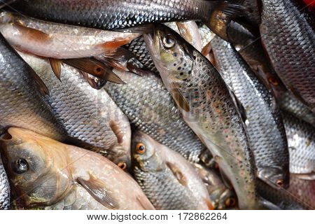 Collection Of Fresh Fish
