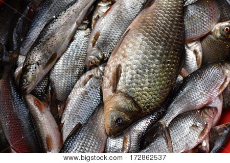 Fresh Lake Fishes In The Fish Market