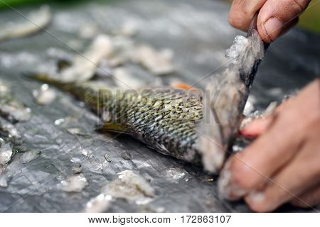 Fisherman clean a fish from scales on the table