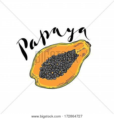 The fruit of papaya on a white background with the words Papaya. Lettering.