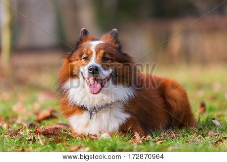 Portrait Of An Elo Dog