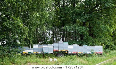Mobile transportable apiary bee hives on the trailer