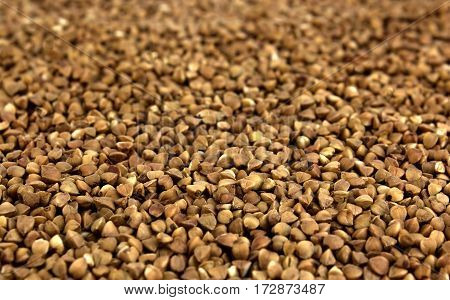 buckwheat grains background useful and tasty natural