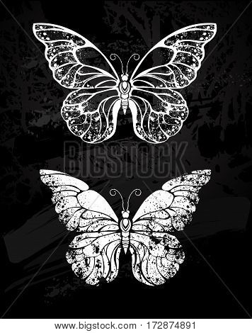 Painted white chalk on black chalkboard silhouette butterfly morfida. Design with butterflies. Drawing with chalk. Butterfly morpho.