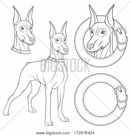 Set of illustrations with a Doberman in a collar. Isolated black and white vector objects on white background.