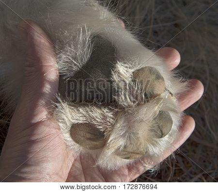 Dog (Malamute) paw on human palm. Close-up.