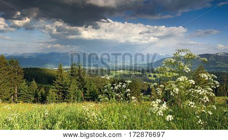 Beautiful flower meadow. Rain clouds approaching form the mountains in the background.