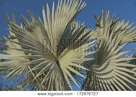 Palms leaves against blue sky background. Vacations dreams.