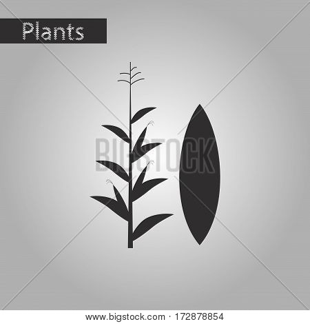black and white style icon of zea mays