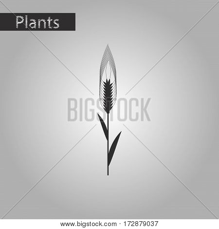 black and white style icon of triticum