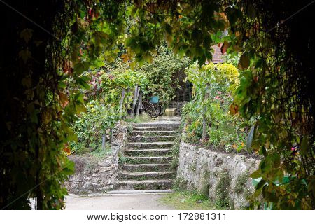 Oldest vineyard on Montmartre hill in Paris France.