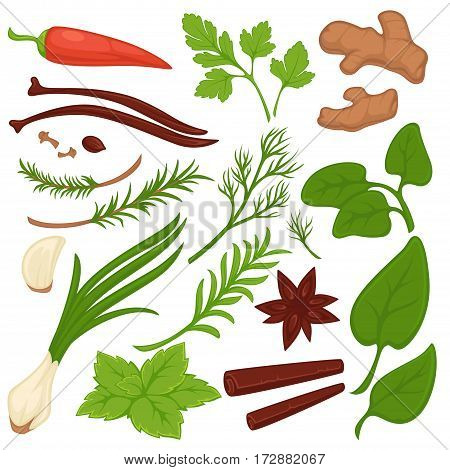 Plants and herbs colorful collection on white. Vector illustration of plants set that grow on backyards. Ginger roots, green leek and parsley stems, red chili pepper and garlic signs in flat design.
