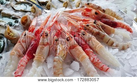 raw fish raw fish shrimp raw fish raw fish shrimp