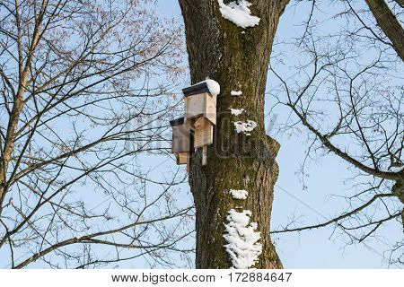 Birdhouse on a tree in winter, bird home