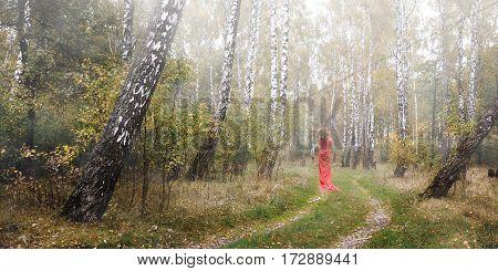 girl in a red dress in a birch grove.