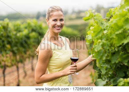 Portrait of female vintner holding wine glass and inspecting grape crop in vineyard
