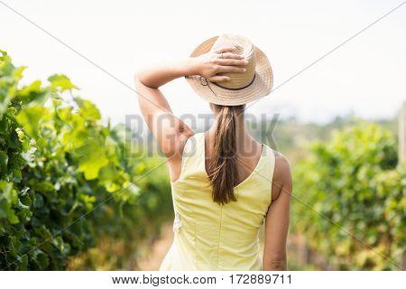 Female vintner in hat standing in vineyard