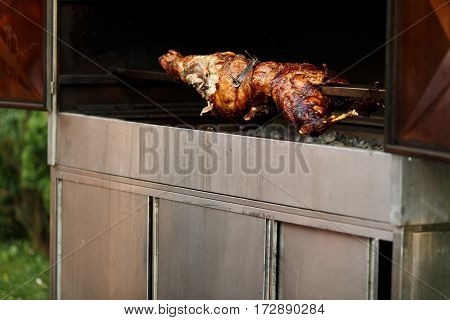 Roasted pig bakes for a wedding dinner
