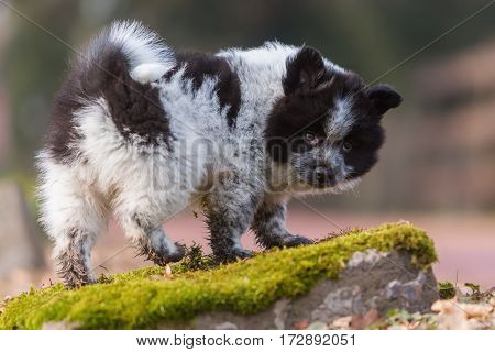 Elo Puppy Standing On A Rock