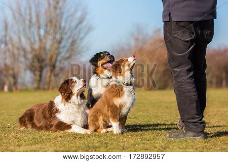 Three Dogs Sitting In Front Of A Man