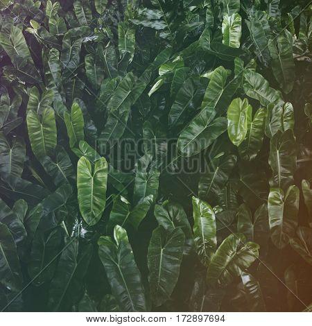 Leaf Greenery Foliage Nature Freshness