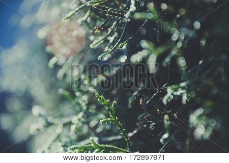 Close up beautiful green sphagnum plant with water drop and blurred background bokeh Vintage tone