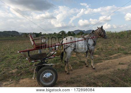 White horse with cart near to garden at Havana, Cuba, 2015.