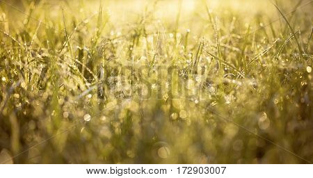 Website banner of grass and water drops in spring