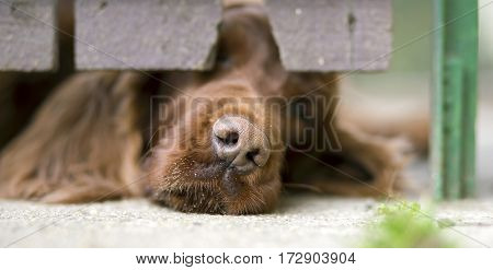 Website banner of a dog puppy's nose