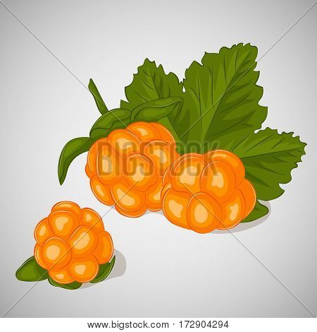 Bright juicy cloudberry on grey background. Sweet delicious for your design in simple cartoon style. Vector illustration. Berries Collection.