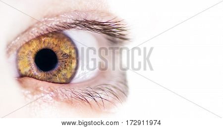 super human brown eye macro close up