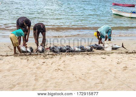 Tamarin Mauritius - December 10 2015: Fishermen cleaning freshly big tuna fish on the beach of Tamarin Bay in Mauritius.
